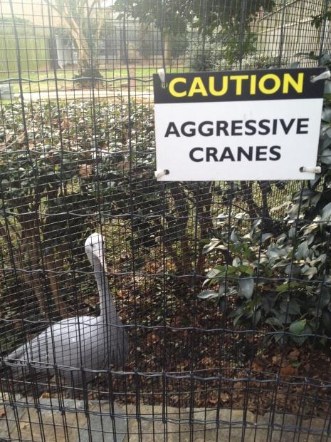 Aggressive Cranes
